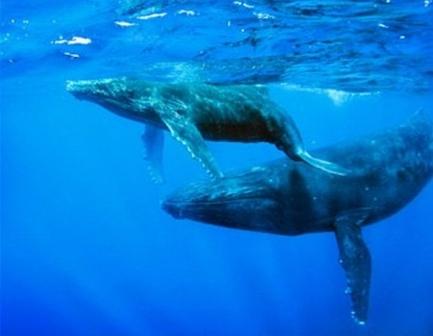 ballenas.jpg